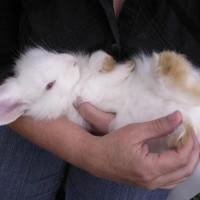 Kaninchen-Impftage im März