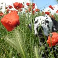 Zecken-Impfung für Ihren Hund